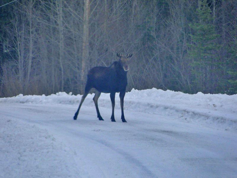 Wild Goose in British Columbia