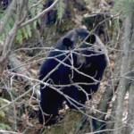 Eine Borkumerin in freier Wildbahn (mit Camera)