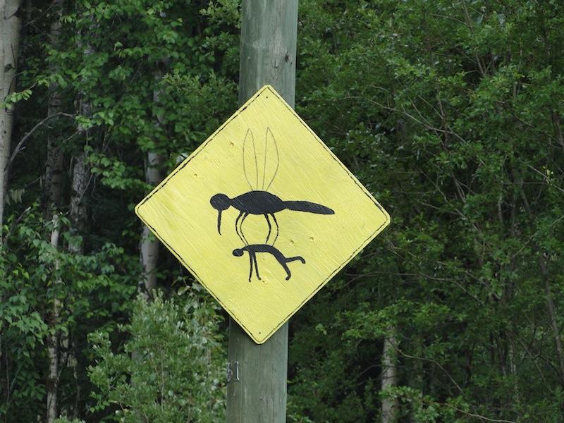 Mückenplage im Mai bis Mitte Juli