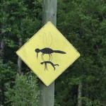 Achtung: Mückenplage