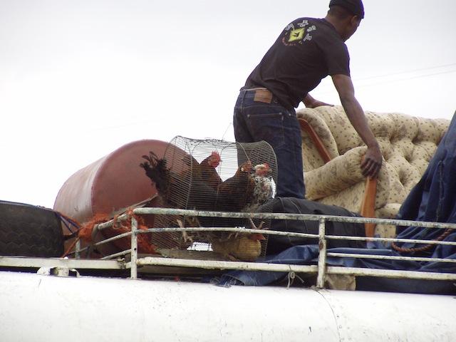 Auf dem Dach werden Möbel + Hühner + ? transportiert