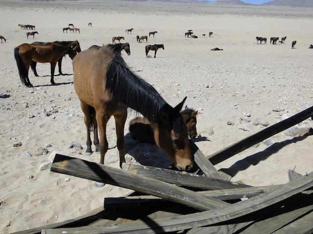 Namibs