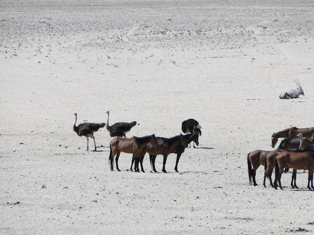 Pferde, Strauße und eine Antilope