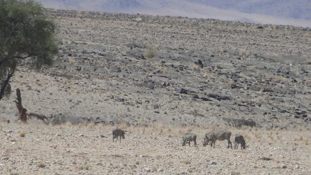 Vier Nashörner