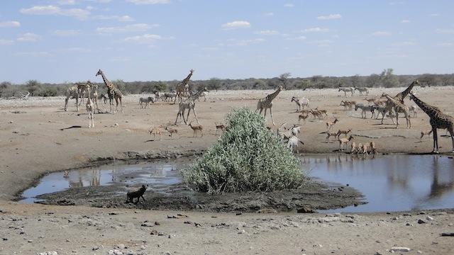 An den Wasserstellen treffen sich friedlich die unterschiedlichsten Tiere