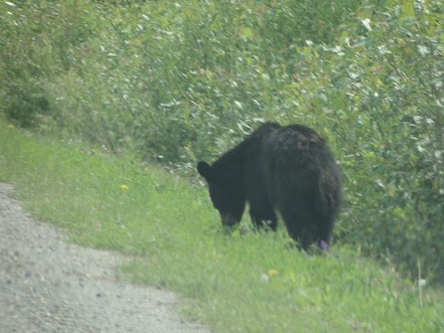 Ein Bär am Straßenrand