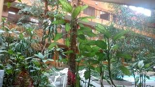 Innenhof des Hotels mit Swimmingpools und Jacuzzi-Whirlpool umgeben von künstlichem Grün