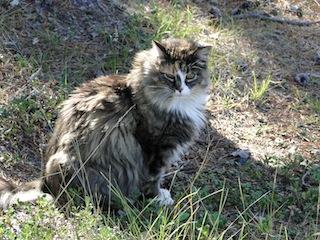 Katze 1449
